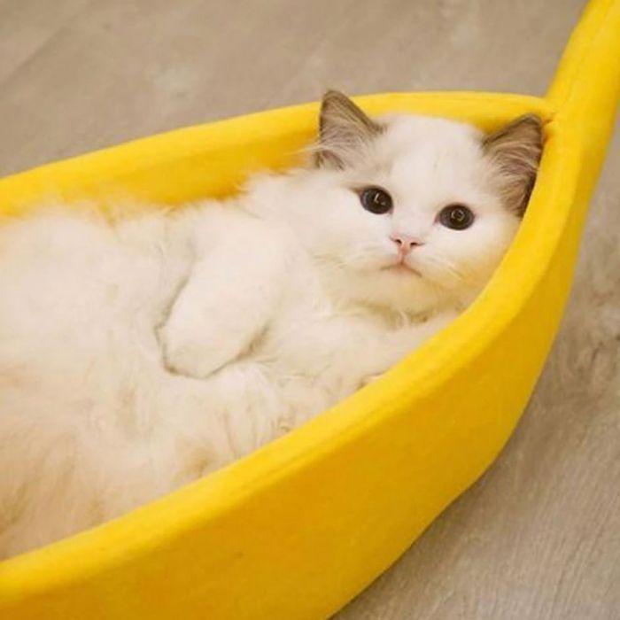 banana peel cat bed